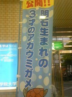 135)ウミガメ〜!