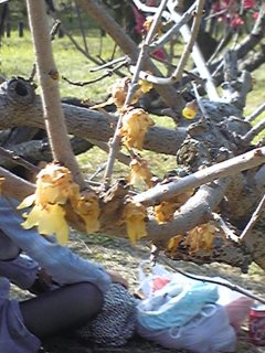 06)♪梅は咲いたか、桜はまだかいな〜