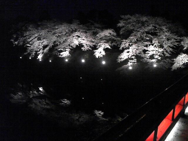 0242)夜桜なう。