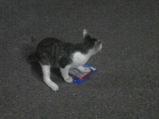あたし、(のら)猫。