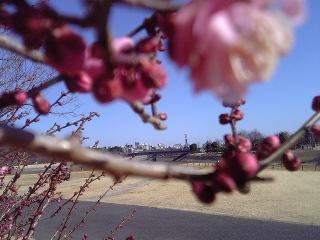 [310]まもなく梅の季節ですよ〜