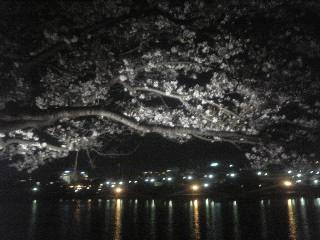 310)夜桜お七(古)