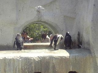 オノ03)動物園から